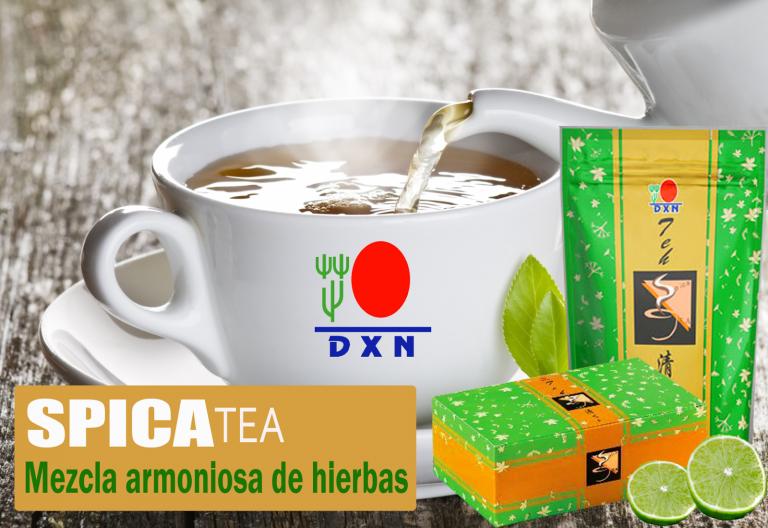 Conoce todos los beneficios del te de spica dxn ✨ y por que ayuda de forma completa a matener tu cuerpo sano ✅ ingresa ahora aquí